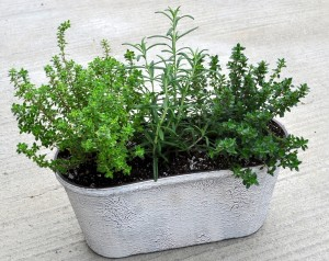 herb-planter-oval_crop
